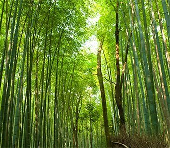 bamboo grove small